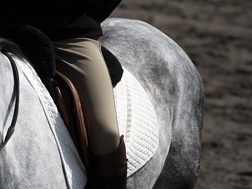 馬事公苑の馬 17の高画質画像