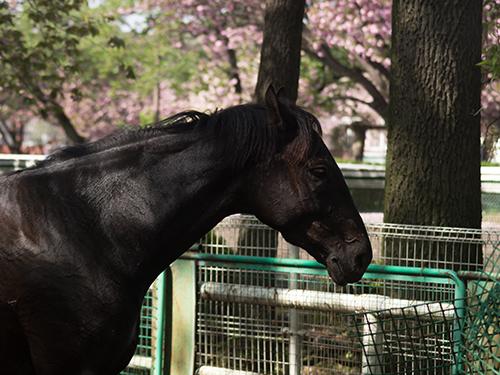 馬事公苑の馬 20の高画質画像