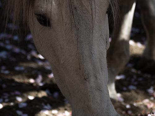 馬事公苑の馬 28の高画質画像
