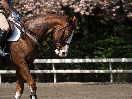 馬事公苑の馬 30の高画質画像