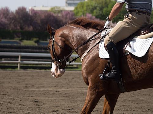 馬事公苑の馬 40の高画質画像