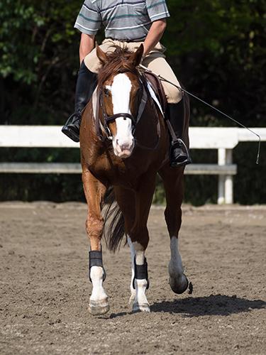 馬事公苑の馬 45の高画質画像