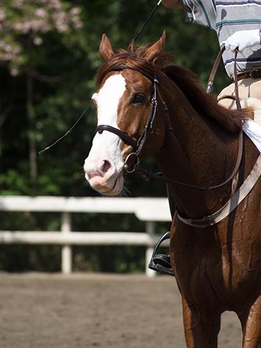 馬事公苑の馬 47の高画質画像