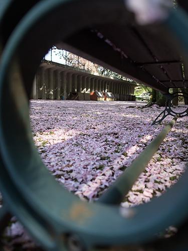 馬事公苑の桜 10の高画質画像