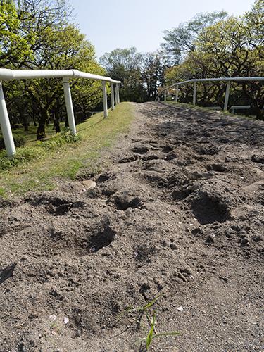 馬の蹄跡、馬事公苑 1の高画質画像