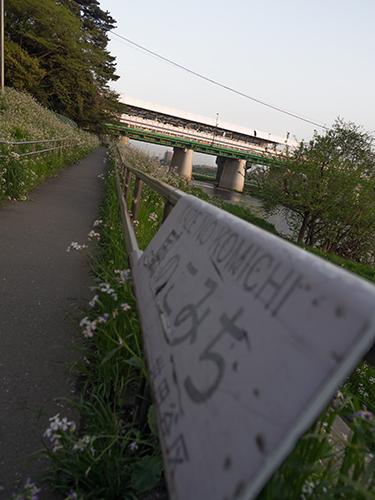 多摩川の自然の高画質画像