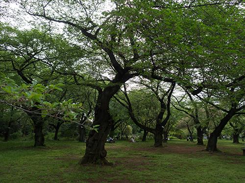 小石川植物園 11の高画質画像