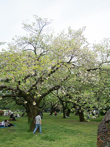 小石川植物園 14の高画質画像