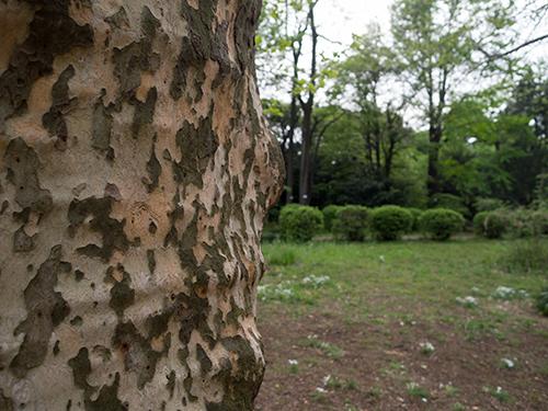 小石川植物園 22の高画質画像