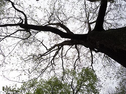 小石川植物園 23の高画質画像