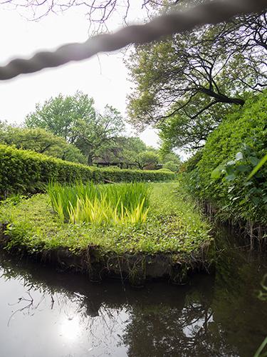 小石川植物園の高画質画像