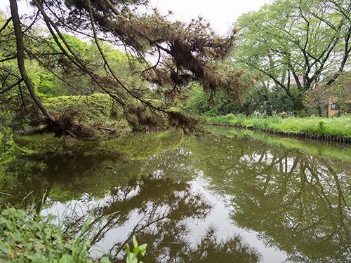 花、小石川植物園 1の高画質画像