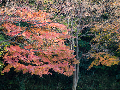 秋の紅葉 1の高画質画像