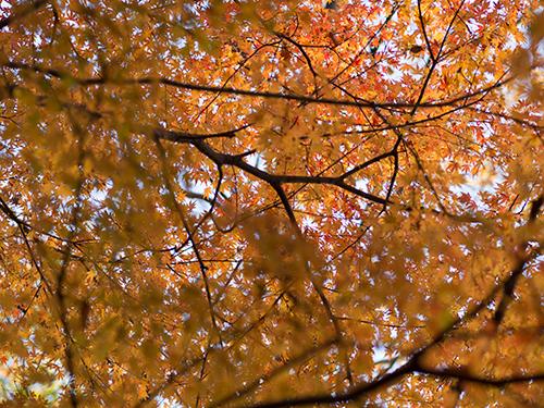 秋の紅葉 8の高画質画像