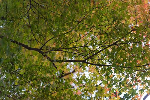 秋の紅葉 12の高画質画像