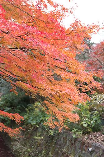 秋の紅葉 15の高画質画像