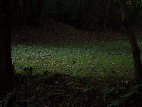 瀬上市民の森 2の高画質画像
