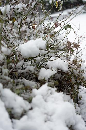 雪が積もった木の高画質画像