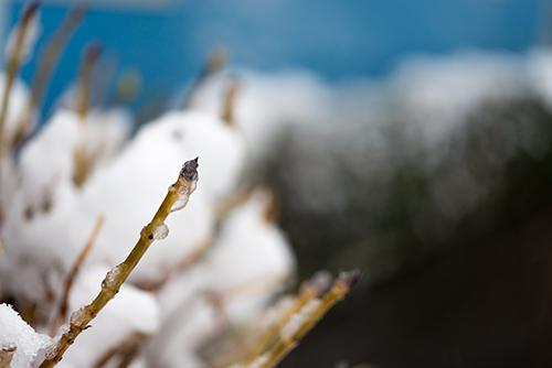 雪が積もった枝の高画質画像
