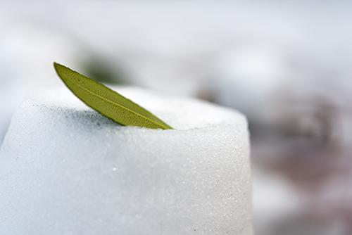 雪の上の葉っぱの高画質画像
