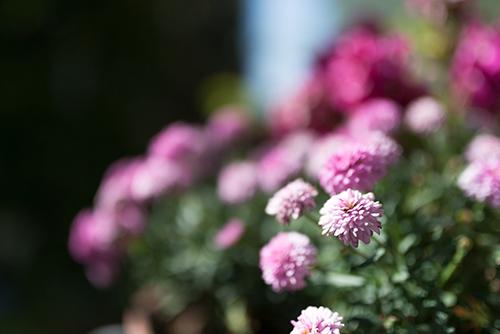 花の高画質画像