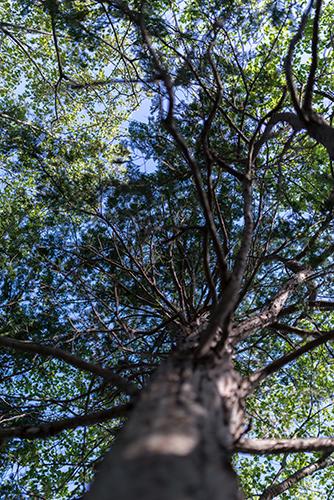 杉の木 2の高画質画像