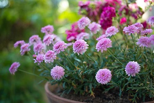 花壇の花の高画質画像