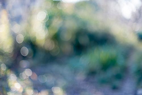 草むらのボケ 4の高画質画像
