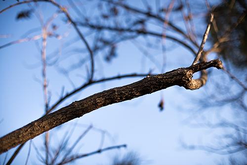 木の枝の高画質画像