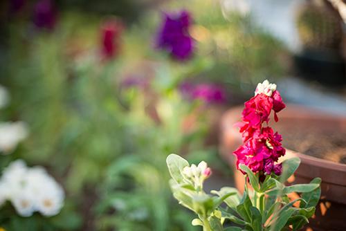 庭の花 5の高画質画像