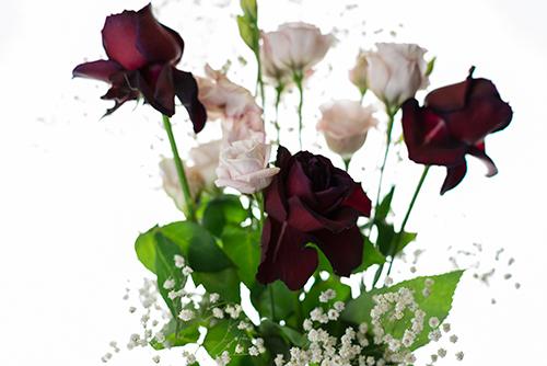 バラの花 4の高画質画像