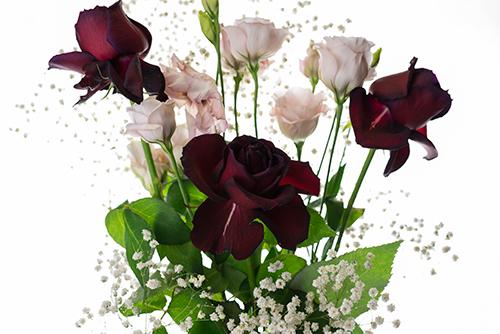 バラの花 6の高画質画像