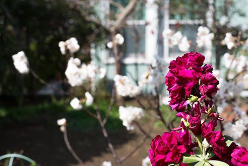ストックの花 3の高画質画像