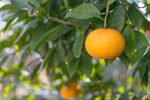 オレンジ 1の高画質画像