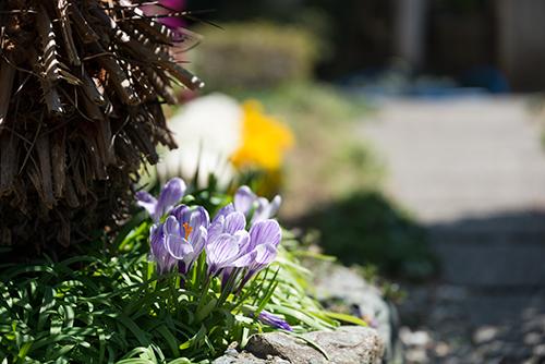 花壇の花 6の高画質画像