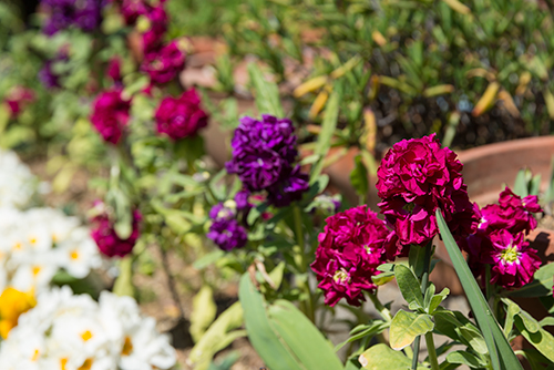 花壇の花 7の高画質画像