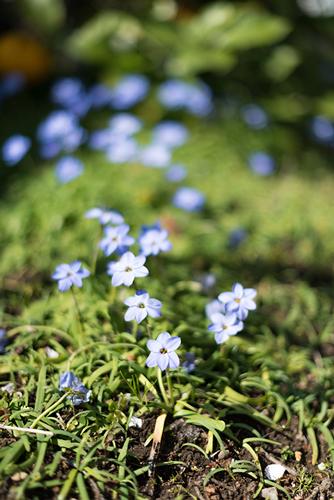 庭の花 9の高画質画像