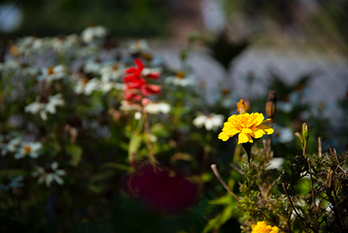 公園のお花の高画質画像