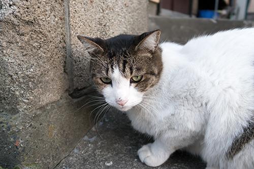 猫 7の高画質画像