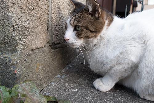猫 8の高画質画像