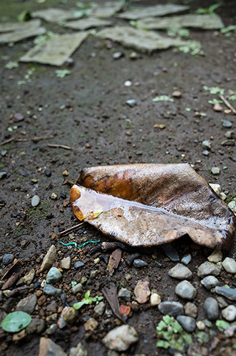 雨の日の落ち葉の高画質画像