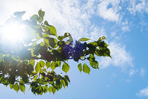青空と葉 1の高画質画像