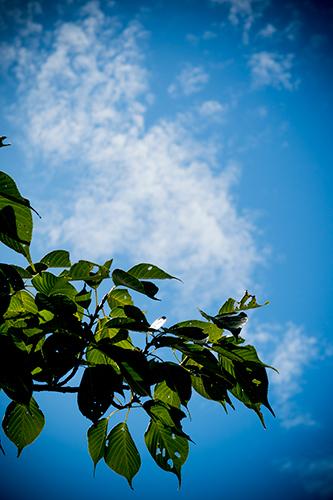 青空と葉 4の高画質画像