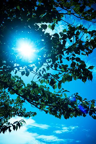 青空と葉 6の高画質画像