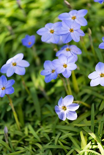 お庭の花 3の高画質画像