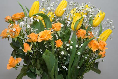 黄色の花の高画質画像