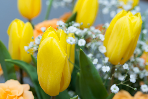 黄色い切り花 2の高画質画像